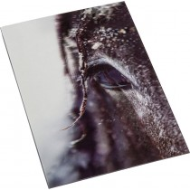 3D-Postkarte - Pferdeimpression-